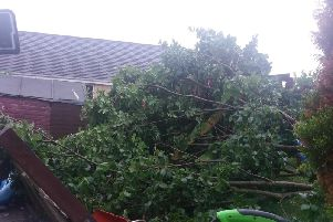 The tree that crashed down.