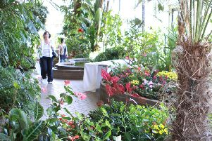 stock pic - The Pavilion Gardens Conservatory, Buxton