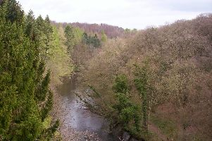 Popular nature spot in Harrogate - Nidd Gorge.