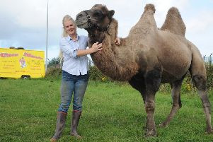 Feature on the importance of animal welfare at Circus Mondao, which is currently set up for August at Norcross.'Ringmistress Petra Jackson with Kashmir the camel.  PIC BY ROB LOCK'10-8-2017