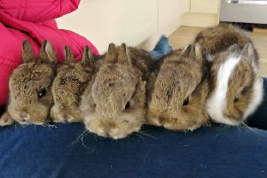 Pet rabbits should be vaccinated and wormed.
