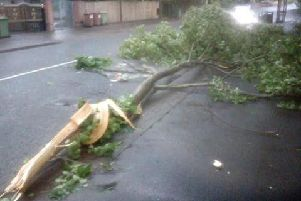 One of the trees came down in Hetton Road in Houghton during the early hours of today. Photo by Kevin Musther.