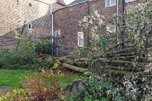 The huge tree fell down in the medieval church's graveyard