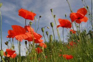 Residents in Chorley will be able to pay their respects to those who have lost their life in conflict