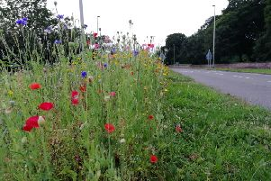 Wildflower verges have already been introduced in some parts of the country