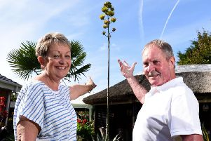 Maureen and John Hall with the agave plant which has grown to 15ft high in their Lytham garden