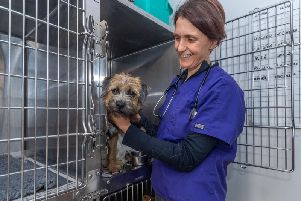 Vet Anne Norton - wife of The Yorkshire Vet TV star Julian Norton, at Rae, Bean & Partners Veterinary Surgery in Boroughbridge - pictured caring for Peggy.