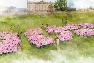 Artist's impression of the mass planting of dahlias at Chatsworth.