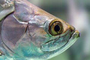 Pictured is a general, stock image of a fish.