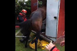 The stuck horse. Picture: Derbyshire Fire and Rescue Service.