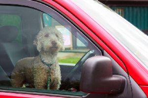Leaving your dog in a hot car can be considered a criminal offence