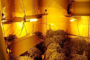 A cannabis farm has been found in Bramley, Leeds. Photo credit: West Yorkshire Police