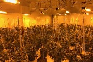 Police seized drugs plants at the site of the former Fairway pub on Warmsworth Road, Balby