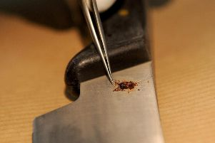 A forensic scientist collecting blood and fibers from a knife