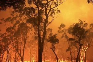 Are you donating to help Australia recover from the bush fires?