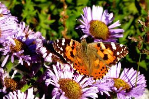 The total mass of insects is falling says our correspondent. Picture: Barry Crossley
