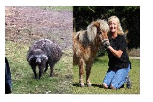 Left, a Raccoon dog. Right: Mandy Marsh, 53, with pet pony Peaches.