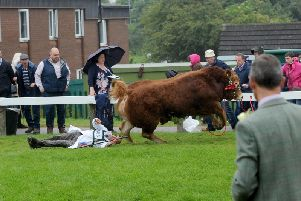 The handler briefly lost consciousness after being trampled by the bull.