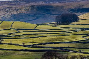 More than 30 per cent less land in the Yorkshire Dales National Park is in an agri-environment agreement now than it was four years ago. Picture by James Hardisty.