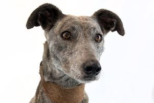 Needing an owner: Sky is up for rehoming at the RSPCA.