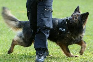 The police dog unit was called to assist with the arrests in Halifax