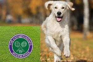 First ever tennis tournament for dogs 'Woofbledon' is taking place in Calderdale