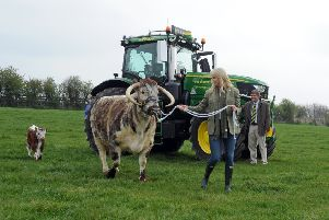 Charles Mills, show director at the Yorkshire Agricultural Society, watches on as sporting soprano Lizzie Jones poses with Longhorn on the Blockley family's farm in Drighlington, near Bradford, at the launch of the 161st Great Yorkshire Show. Picture by Tony Johnson.