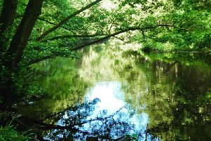 The beautiful waters of the River Nidd at Nidd Gorge. Picture: Rachel Christy
