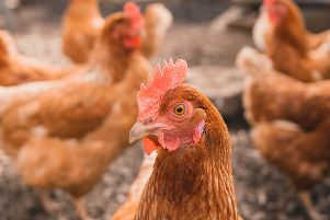 Permission has been given for an egg-farm capable of housing up to 64,000 hens in North Yorkshire.