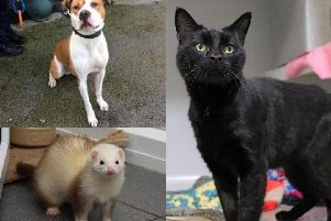 Five animals at Halifax RSPCA looking for a new home - can you help?