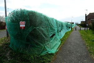 The covered hedge row along Worsett Lane, Hartlepool. Picture by FRANK REID