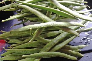 A large pile of pickings of runner beans.