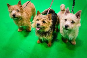 Crufts 2020 runs from March 5 to 8. Picture: Beat Media and the Kennel Club.