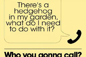"""""""What should I do with the hedgehog?"""""""