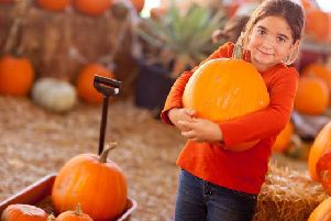 Autumn is now in full swing and with Halloween just around the corner, you may be searching for the best places to get your hands on a pumpkin