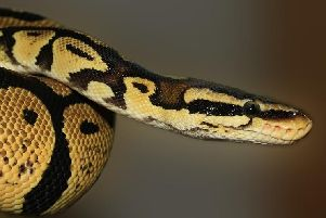 The video showed a person having sex with a snake along with other animals