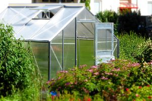 How to keep a greenhouse