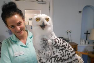 A member of staff at Laurel Bank care home with a snowy owl.