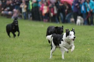 This year there will be a gun dog display