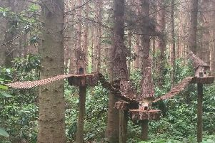 Fairy houses in the trees at Northwood Trail - Pic: Lamorna Roberts