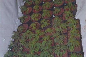 One of Lancashire's biggest ever cannabis farms has been raided in Apex Trading Estate, Lower Eccleshill, Darwen at around 10am yesterday (October 8)
