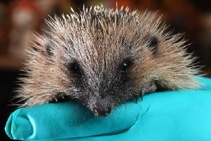Give a hedgehog a home for the Winter