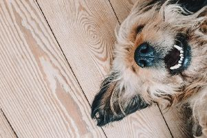 Having a pet doesn't have to mean compromising on style