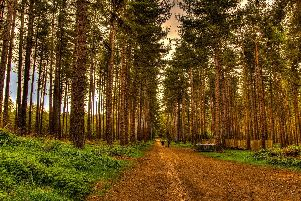Sherwood Forest has been named the world's third most popular forest with Instagram according to site rankings this month.