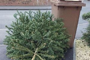 This is how to recycle your Christmas tree in Preston and when you can leave it out