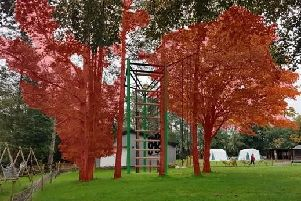 Computer-generated image of how the high ropes course would look amongst the trees at the scout camp