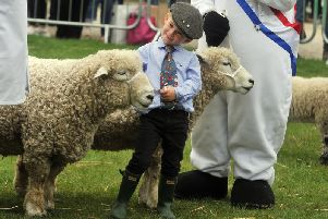Ollie Delmer with Devon and Cornwall Longwool's in the Peoples Choice category in the sheep ring at the Great Yorkshire Show.