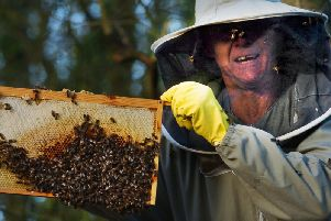 Steve Ganner and his bees