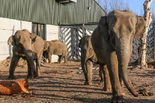 Some of the female elephants at Blackpool Zoo