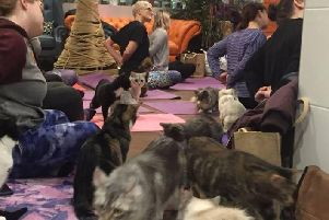 The cat yoga class in full swing (pic: Kitty Cafe Facebook)